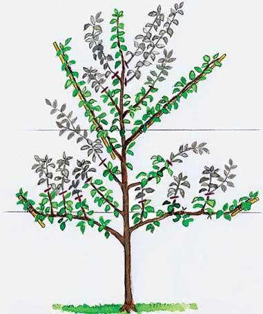 spalierobst richtig schneiden pinterest garden garden plants and plants. Black Bedroom Furniture Sets. Home Design Ideas