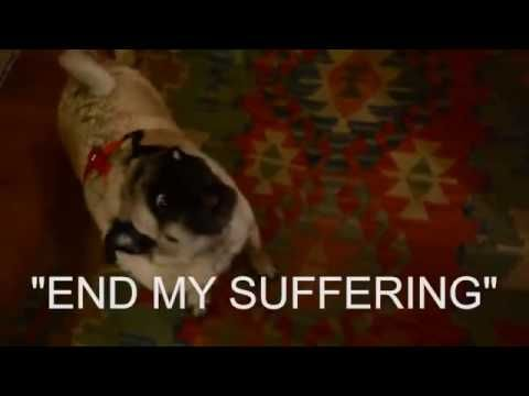 Pug Party God Is Dead Youtube It Is The Best Thing I Have Seen