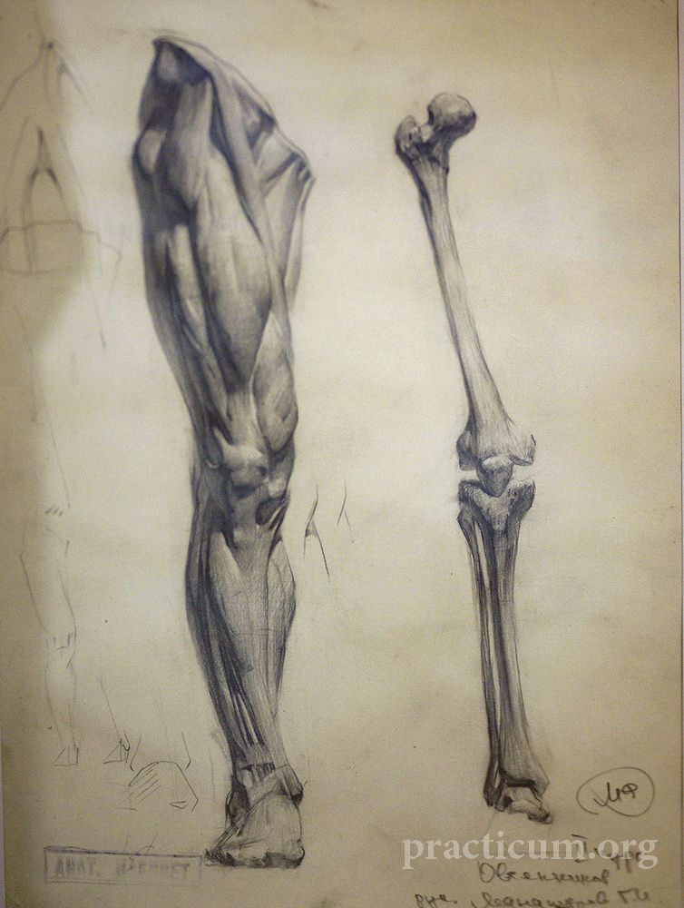 Pin By Barby Anillo On Anatomy And Drawing Leg Anatomy Anatomy Sketches Anatomy Art