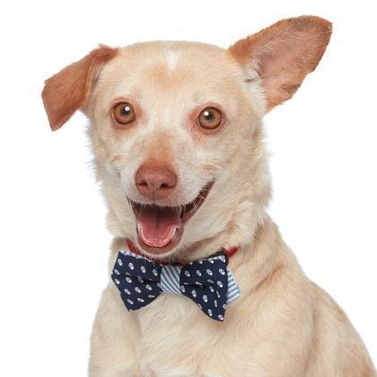 Gayweho Dogs 4 U On Dog Adoption Chihuahua Dogs Chihuahua
