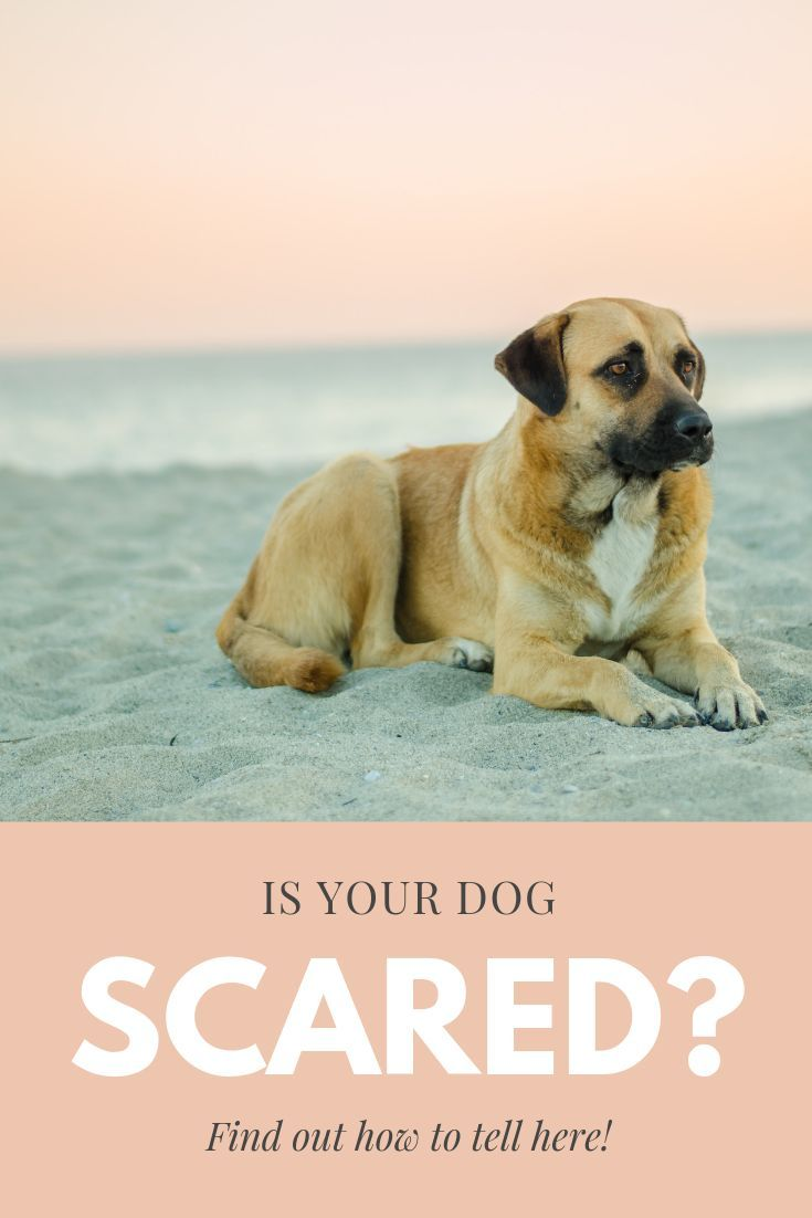 How To Tell If Your Dog is Scared Training your dog