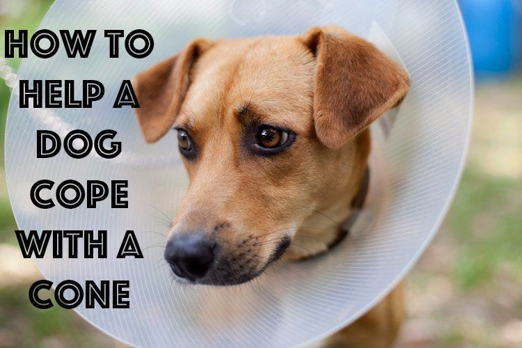 How To Help A Dog Cope With A Cone With Images Dog Insurance