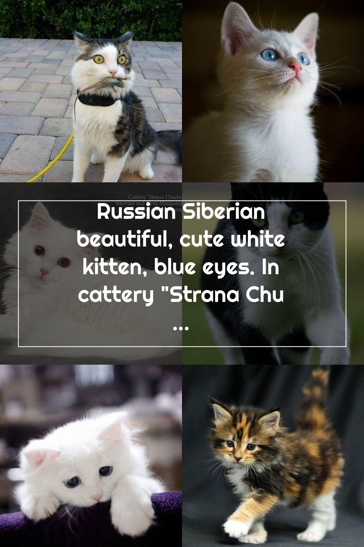 Pin On White Kittens