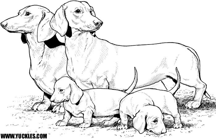 Dog Breed Coloring Pages To Print Off And Color