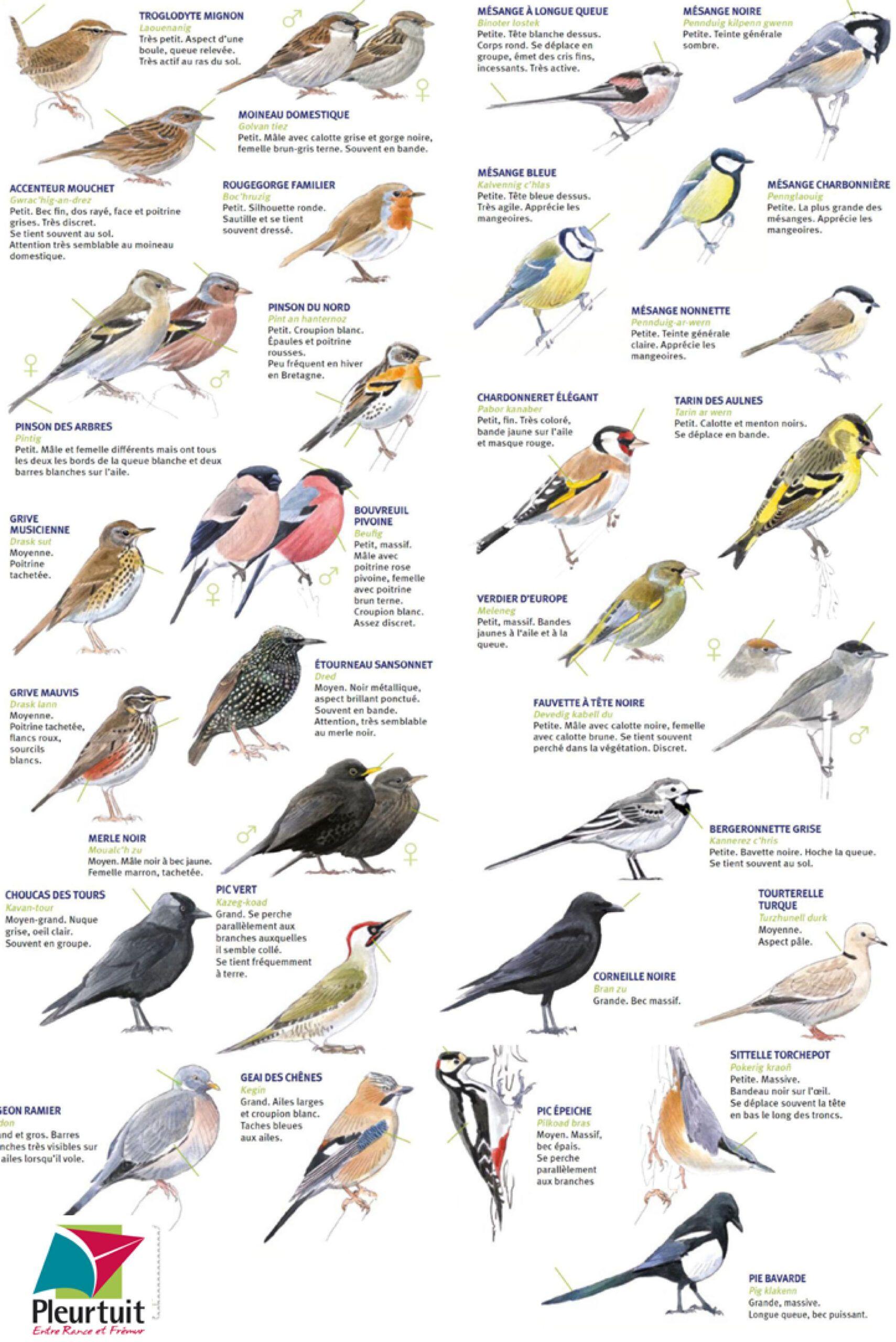 Oiseaux De Nos Jardins Bretagne : oiseaux, jardins, bretagne, Oiseaux, Jardins., Janvier, Février, Jardins,, Bretagne,, Nourriture