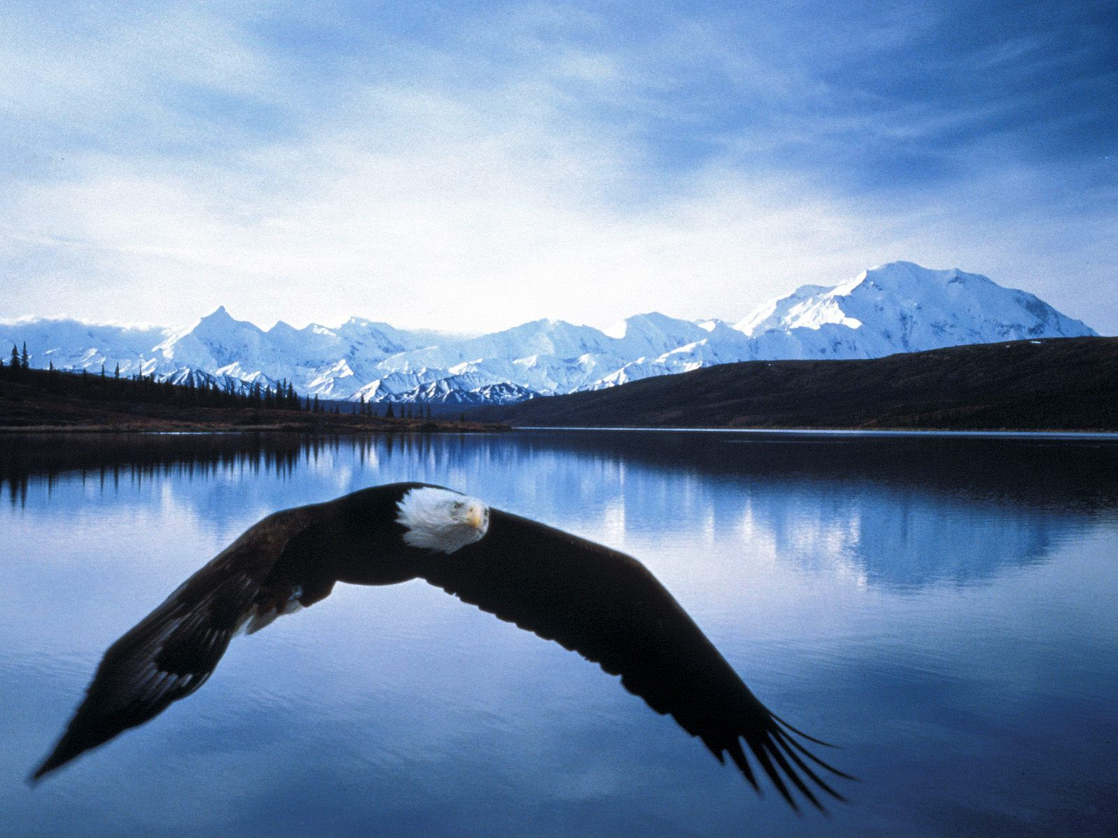 What an incredible and unique photo of this Bald Eagle. Up in Alaska.