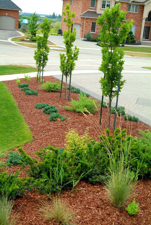 Lots of wood chips and easy maintenance plants. - Lots Of Wood Chips And Easy Maintenance Plants. Garden-Driveway