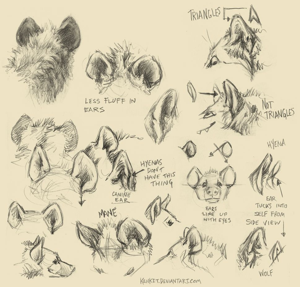 Pin by Nicole on Drawing References | Pinterest | Hyena, To draw and ...