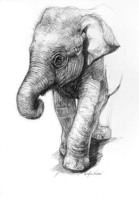 Pin by Toni on Animals Pinterest Drawings, Sketches and Drawing