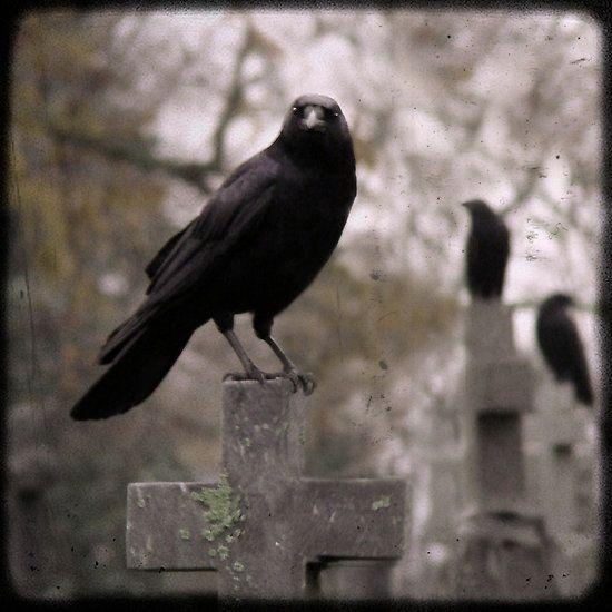 Graveyard crows watching