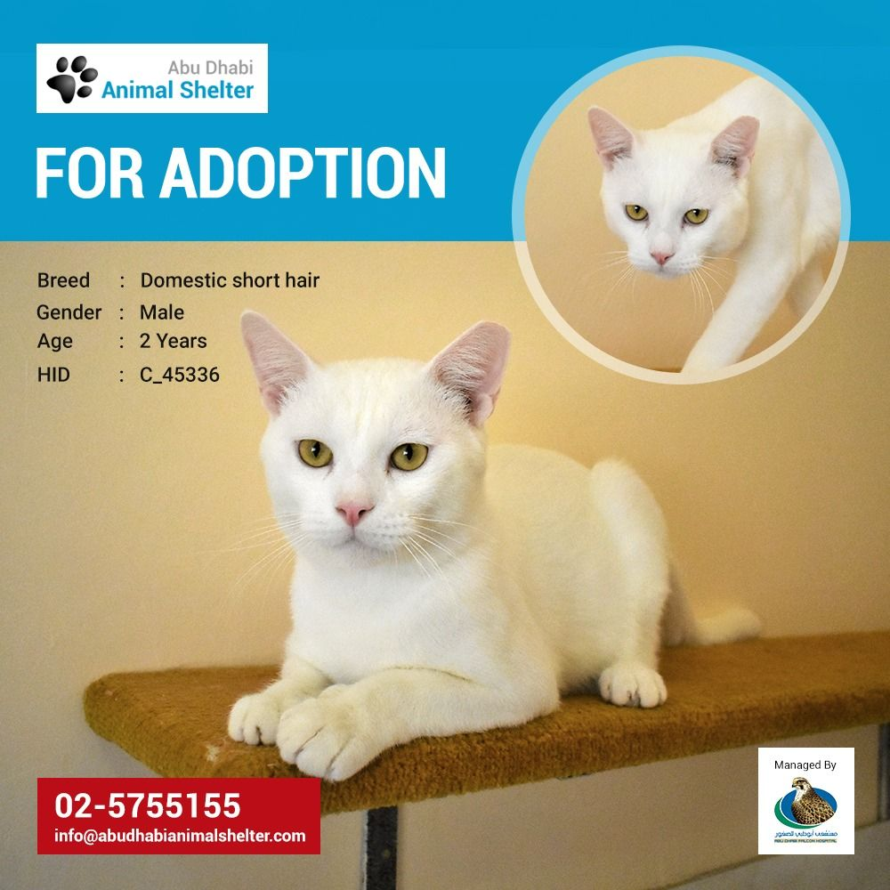 Pin by Abu Dhabi Animal Shelter on Abu Dhabi Animal