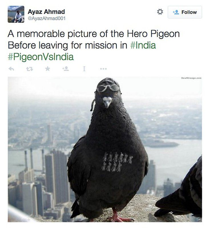 Internet Goes Wild After India Detains Pakistani Spy Pigeon | GOOD