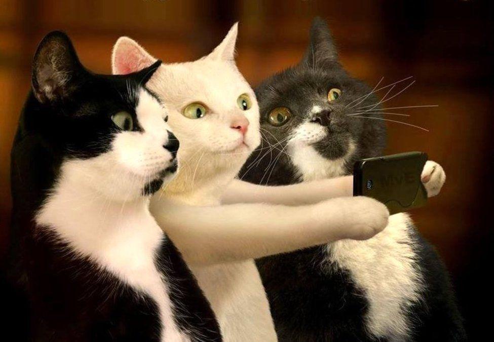 Lustige Videos Von Katzen