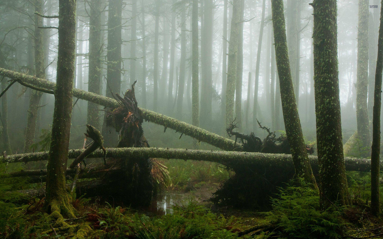 Misty swamp forest wallpaper Forest wallpaper, Woodland