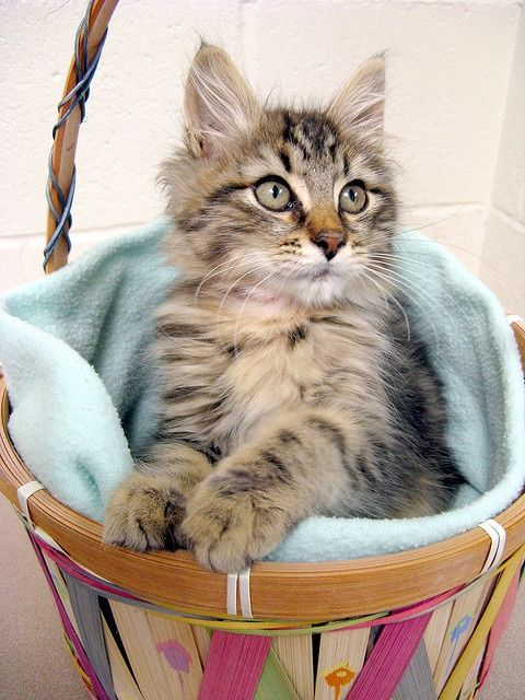 Basket Cat Pretty Cats Cats Cat Cuddle