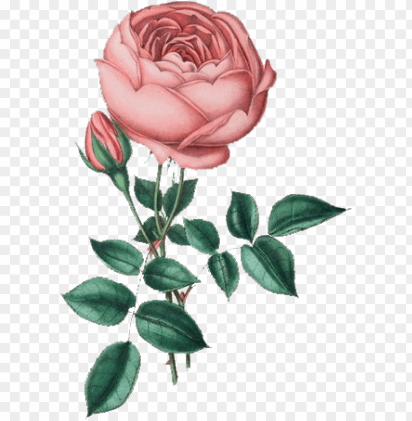 Flores Vintage Png Flores Vintage Con Fondos Transparentes Png Image With Transparent Background Png Free Png Images Aesthetic Stickers Free Png Png Images