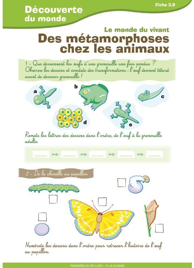 redaction metamorphose en animal