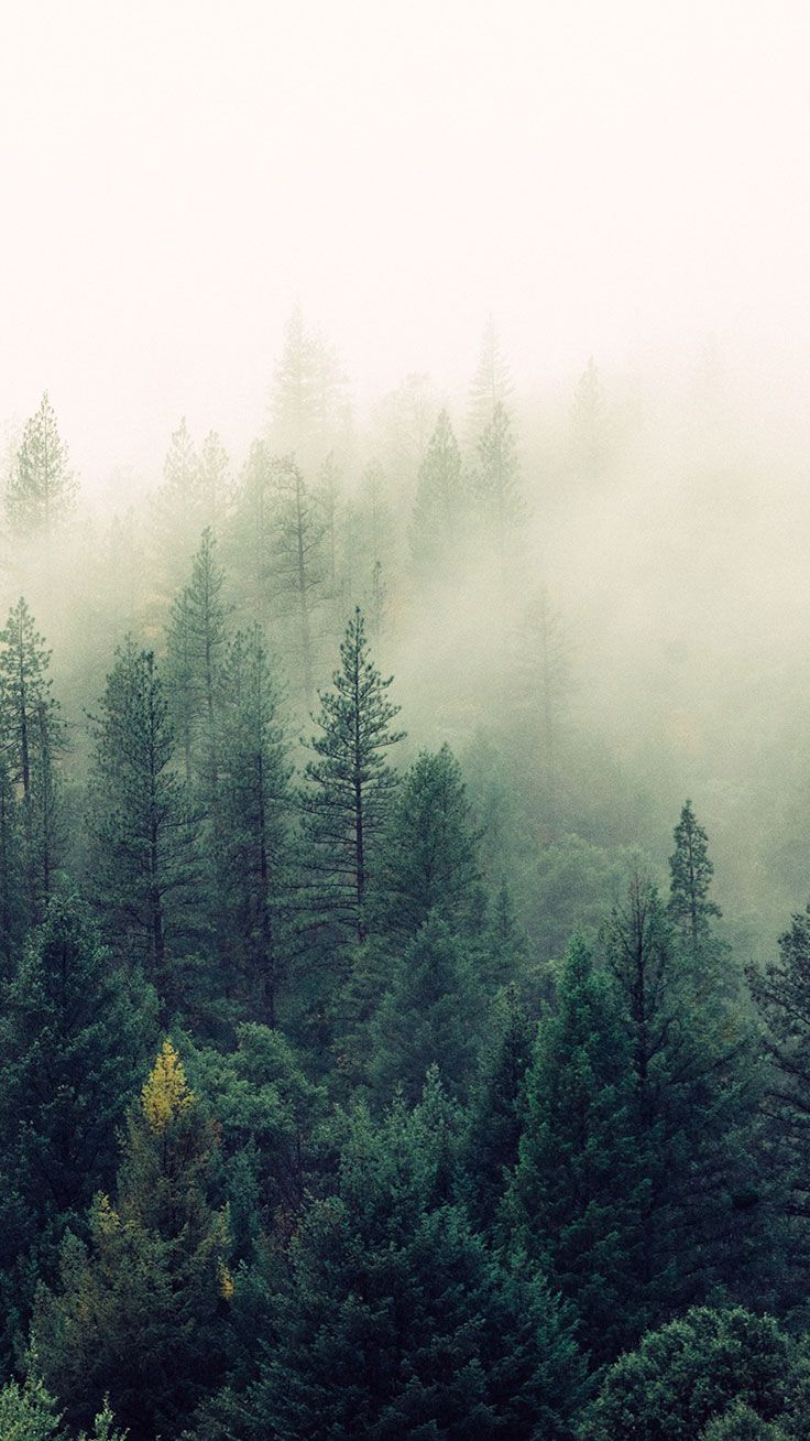 16 Adventurous Forest Mountain Iphone 7 Wallpapers Preppy Wallpapers Nature Iphone Wallpaper Nature Inspiration Nature Wallpaper
