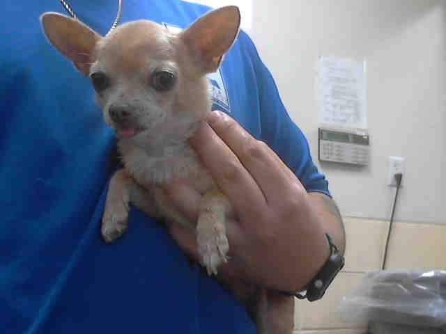Pin By Morgan Rist On Adopt Me Seniors Animal Shelter Humane