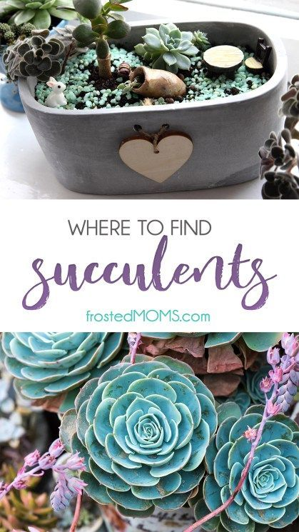 Succulents \u2013 Where to Find Them for Your Garden, Decorating or