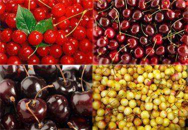 4 In 1 Cherry Tree Bing Black Tartarian Rainier And