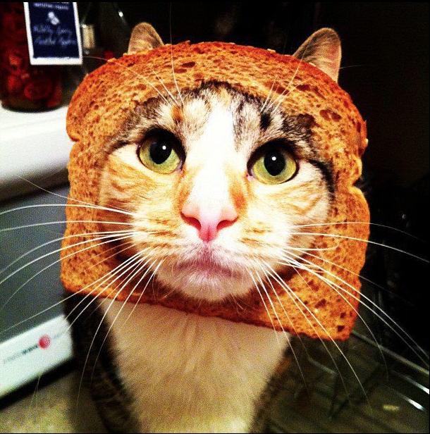 transforme ton chat en lion avec une tranche de pain de mie