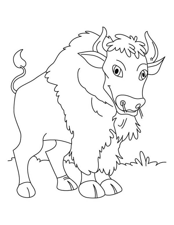 Bridge To Terabithia Pages Coloring Pages News To Gow Pinterest