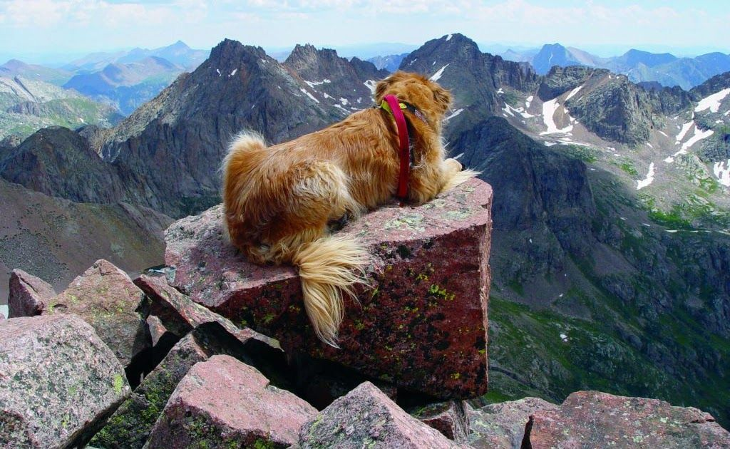 Colorado Man Shares Advice For Hiking With Dogs After Referrals