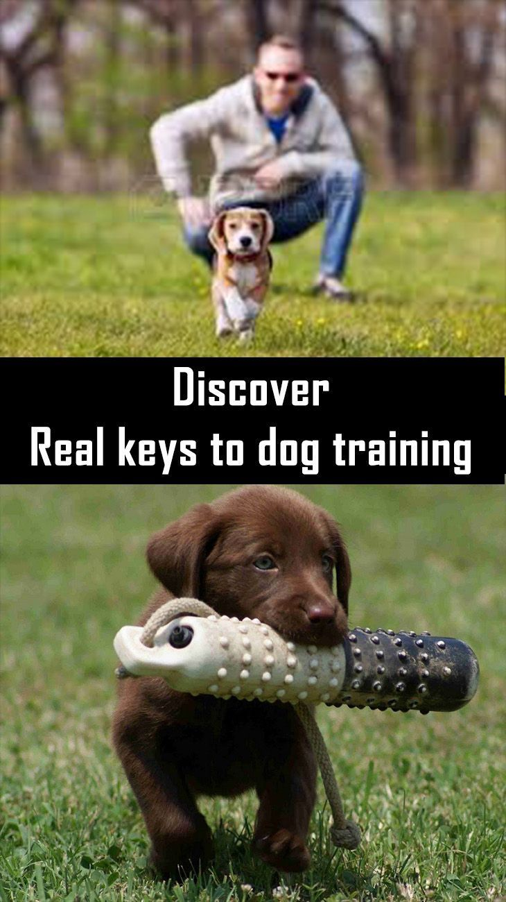 Dog training tips how to win your dogs mind dog training cute