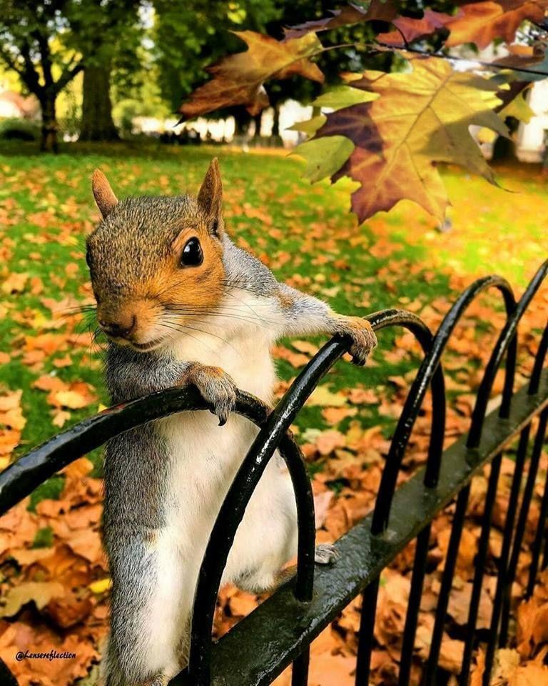 Осень смешные картинки, чистые