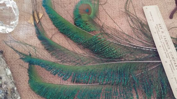 Peacock Feathers 5 Border Feathers Rainbow of by CherylsGoodStuff