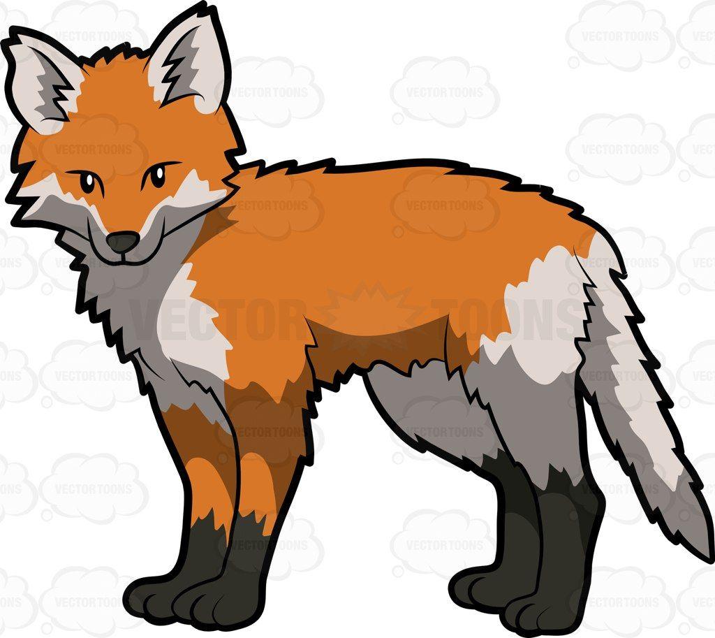 Is a fox an omnivore?