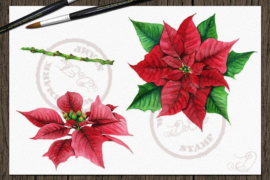 Poinsettia Watercolor Clip Art , #ad, #clip#poinsettia#Ideal#arts #Ad #clipartfreebies Poinsettia Watercolor Clip Art , #ad, #clip#poinsettia#Ideal#arts #Ad #clipartfreebies