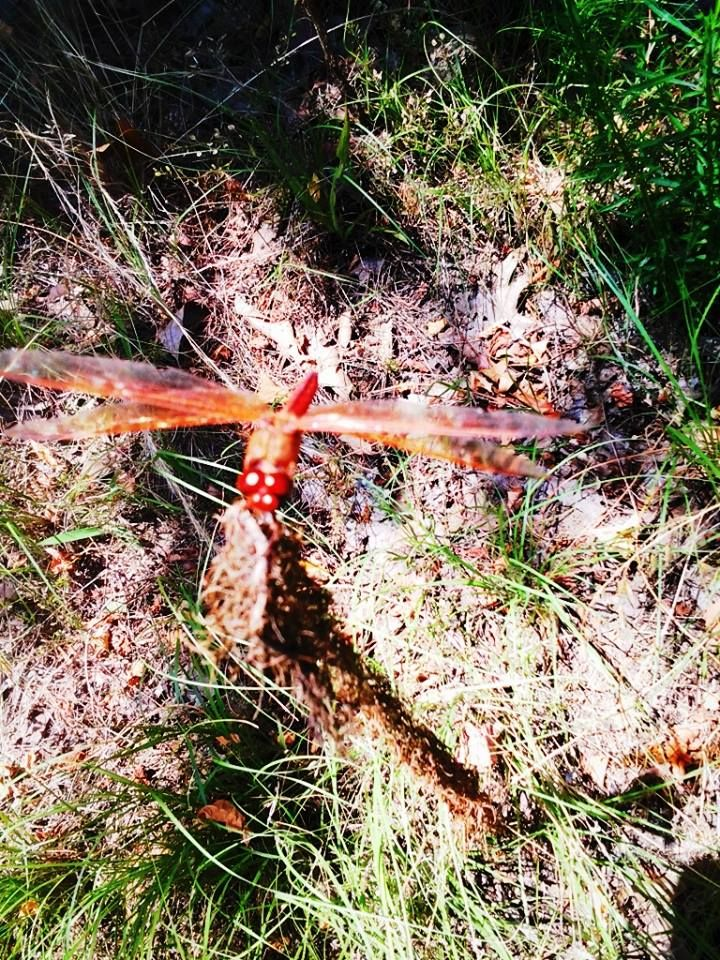 Dragonfly That Let Me Take It S Photo The Photo Does No Justice