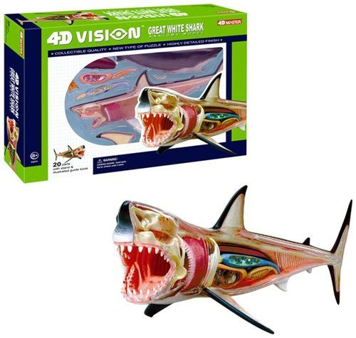 4D Vision: Great White Shark Anatomy Model in 2020   Great ...