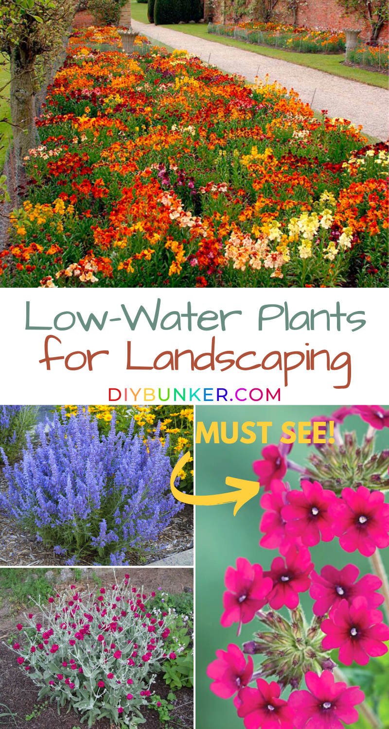 12 Drought Tolerant Flowers and Plants That'll Add Color to Your Garden is part of Low water landscaping, Drought tolerant landscape, Drought tolerant plants, Low water landscaping front yard, Low water plants, Low water gardening - These 12 drought tolerant plants will add life and color to your garden, even if you live in a hot and dry desert environment  These flowers love the sun!