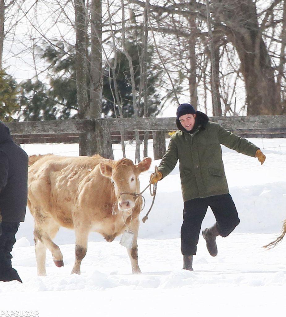Celebrity & Entertainment Robert pattinson, Cow meme, Robert
