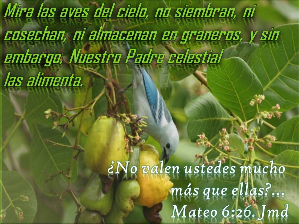 Marizol Salas (333MARIZOL) on Pinterest