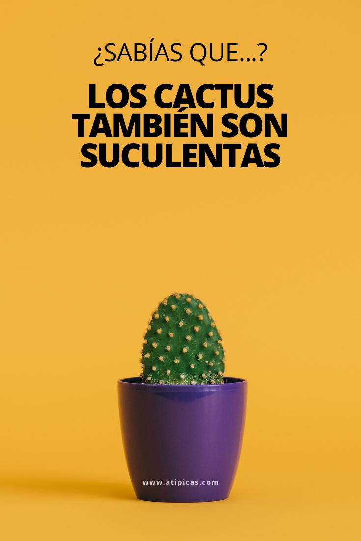 49++ Cuidado de los cactus trends
