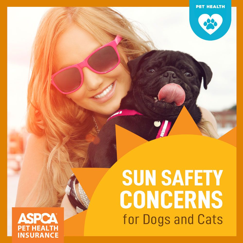 Sun Safety Concerns For Dogs And Cats Dog Cat Pet Health Pets
