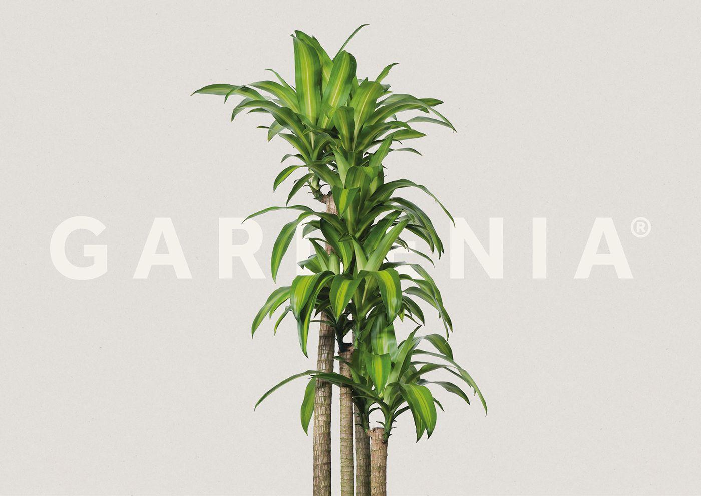 inspiring gardenia house plant. Gardenia on Behance  Arabic logos Pinterest Gardenias
