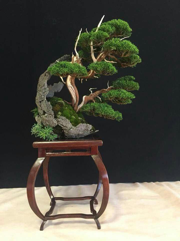 Club Escuela De Bonsai Online Bonsaiparaprincipaintes Bonsai árboles Bonsai Comprar Bonsai