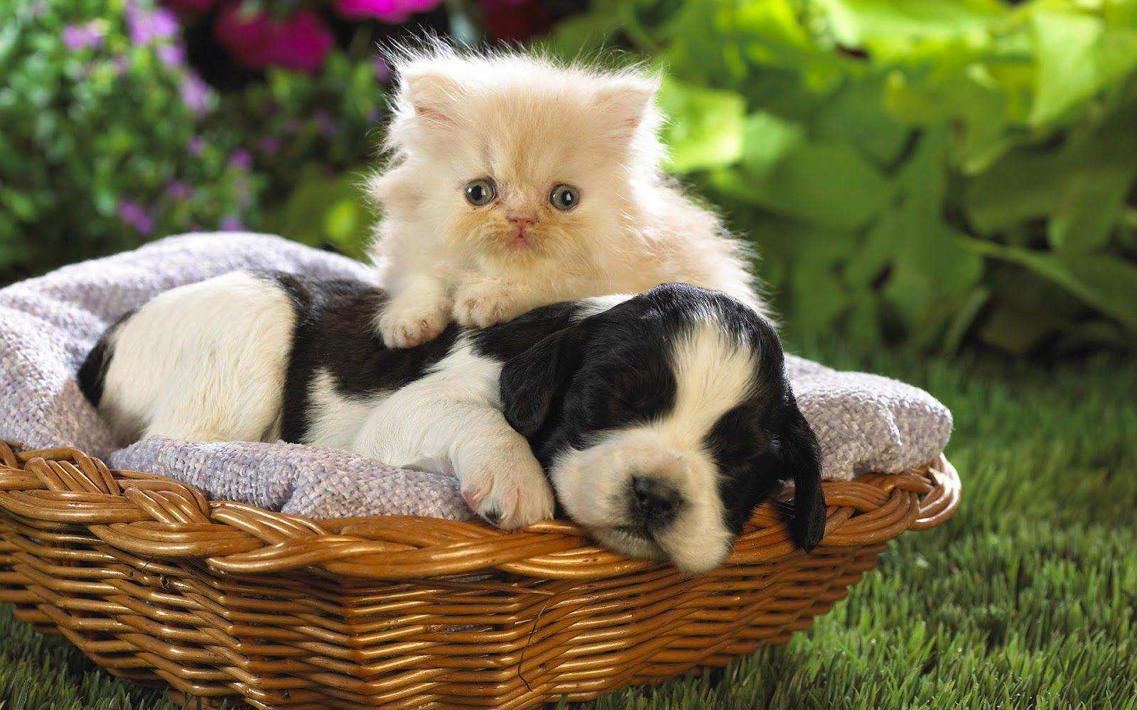 Zoo Animals Funny Cat & Dog Friendships