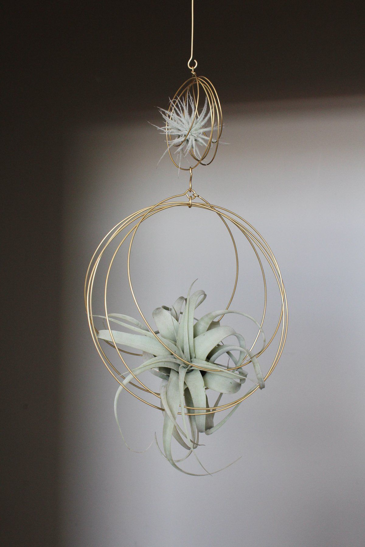 Xerographica Tillandsia + 2Tiered Ornament Hanging air