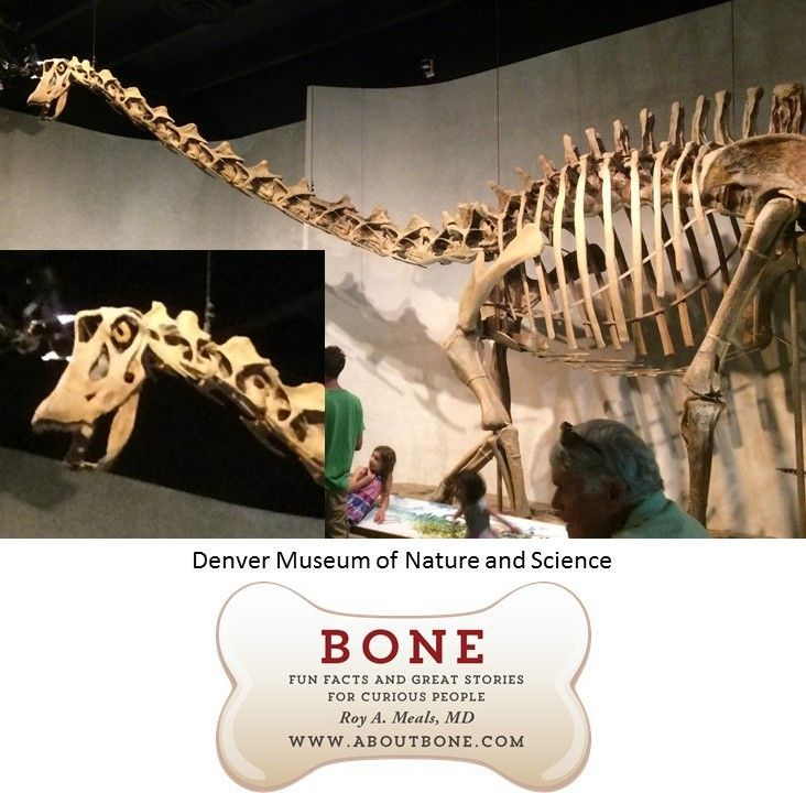 bone, skeleton, anatomy, dinosaur, natural history museum #historyofdinosaurs bone, skeleton, anatomy, dinosaur, natural history museum #historyofdinosaurs