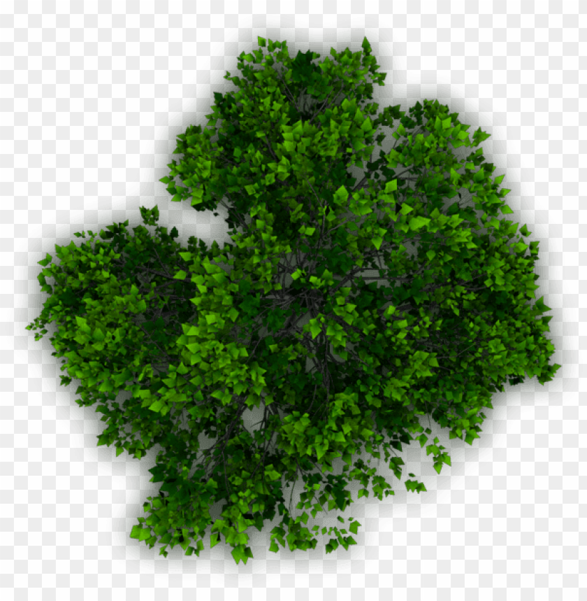 Tree Plan Png Download Trees Plan Png For Photosho Png Image With Transparent Background Png Free Png Images Tree Plan Png Tree Plan Globe Amaranth