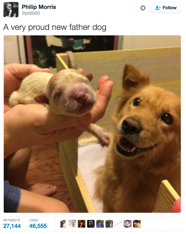 Of The Most Wholesome Things That Have Ever Happened Animal - 32 adorable animals