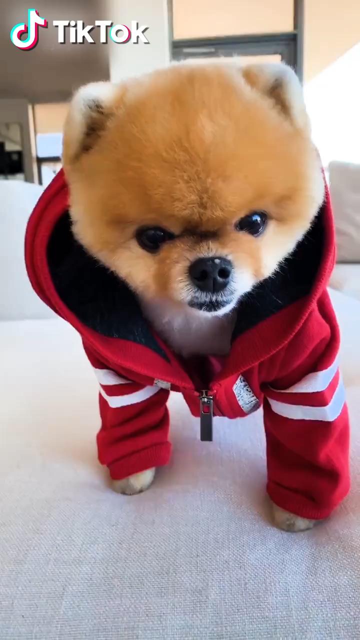 Tiktok Watch Funny Short Videos Cute Puppy Videos Cute Animals Puppies Cute Animals With Funny Captions