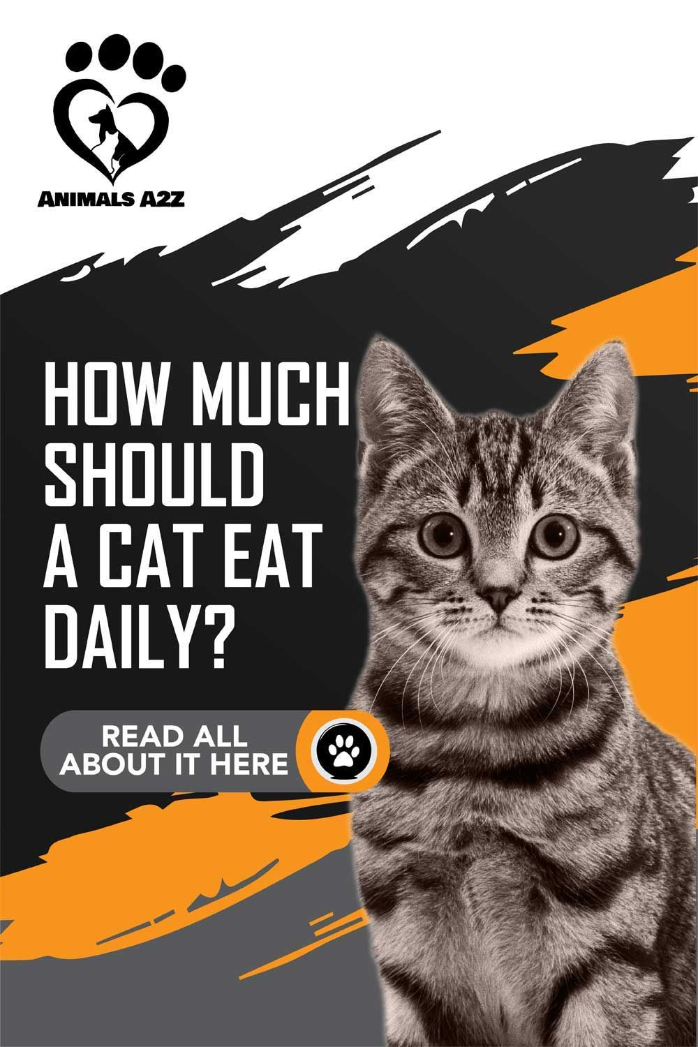 How Much Should A Cat Eat Daily Cat Facts In 2020 Cat Nutrition Feeding Kittens Cat Facts