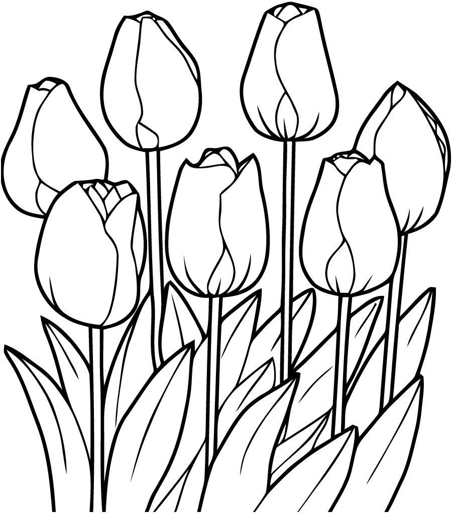 13 Artistique Fleurs Coloriage Images   Coloriage fleur à imprimer, Tulipe dessin